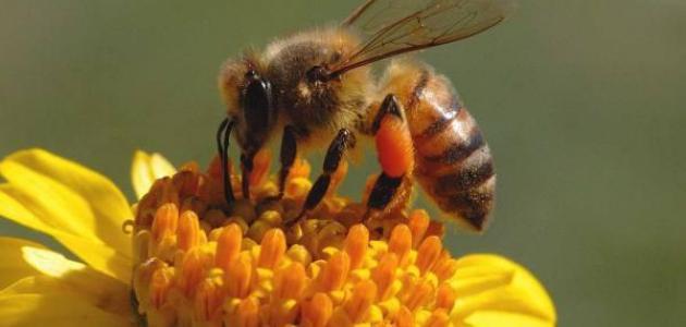 تجارب خلصطة العسل للرجال