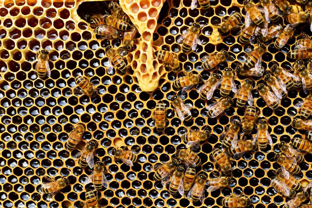 هل العسل مفيد لهشاشة العظام