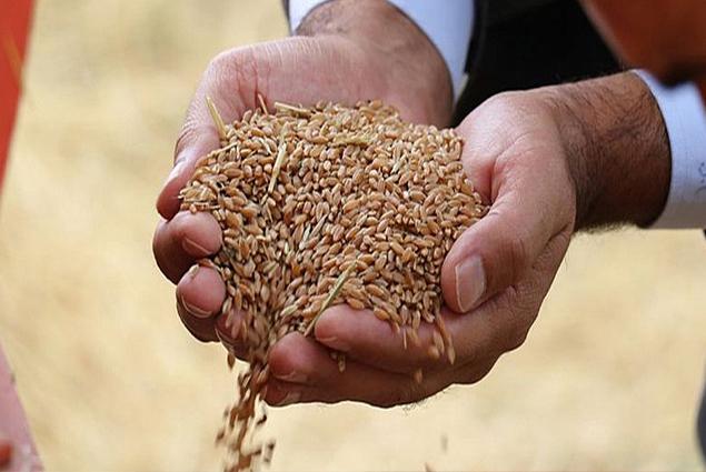 اسعار دقيق القمح في تركيا