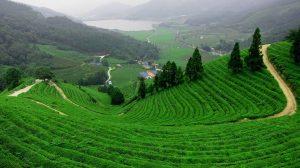 أهم المدن الزراعية في تركيا