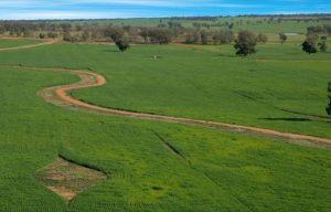 ارض زراعية للبيع في كيركلاريلي
