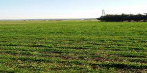 قانون الاستثمار الزراعي في تركيا للأجانب