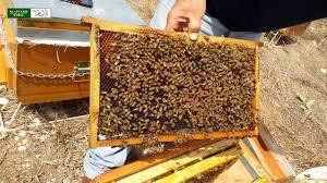 افضل مكان لبيع العسل في تركيا
