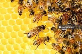 اماكن تربية النحل في تركيا