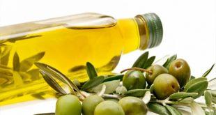 تجارة الزيتون في تركيا .. مكسبك مضمون مع 7 مكاتب