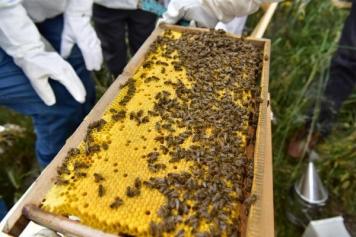 مشروع تربية النحل في تركيا