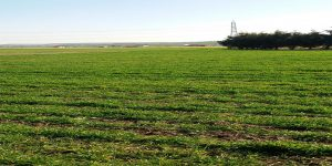 معارض زراعية في تركيا