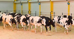 دراسة جدوى مزرعة ابقار في تركيا.. أوثق الاستشارات من 8 مكاتب