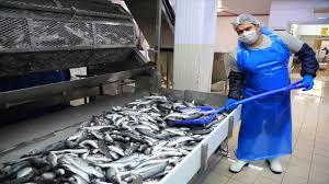 تصدير السمك من تركيا