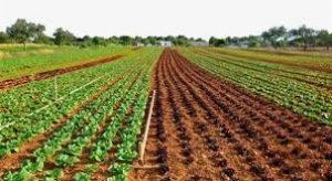 مزارع للبيع في طرابزون